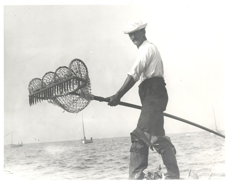 Fisherman with bull rake on catboat in Cape Cod Bay