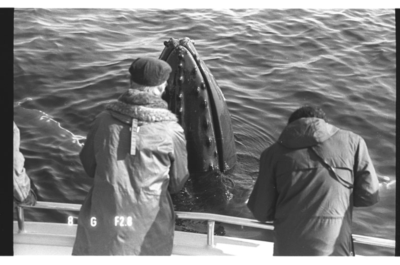 Old whale watch by Center for Coastal studies